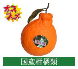 国産柑橘類